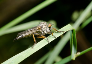 Der Artikel erzählt von natürlichen Insektenschutzarten.
