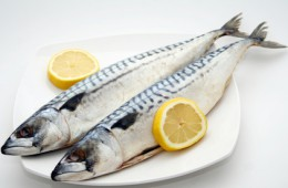 Artikelgebend sind sind Zuchtfische.
